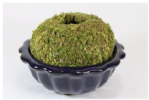 MULTISAVE, Moss Ball and Bonsai Pot combo No. 1